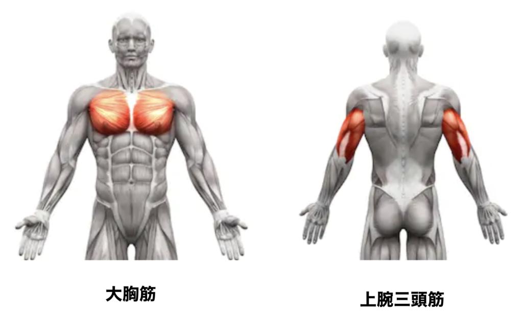 大胸筋と上腕三頭筋の人体図