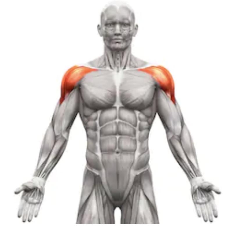 肩のフロントの筋肉