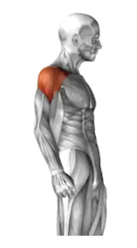 肩のサイドの筋肉
